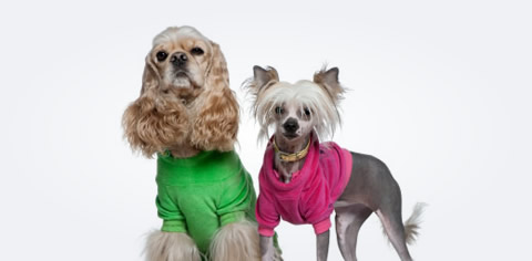 Image of two dogs dressed in human clothing